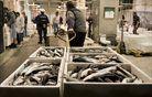 V vrvežu tržaške ribje borze