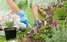 Kako kupiti vrtno orodje