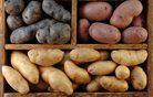Zanimivosti o krompirju ...