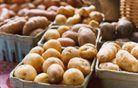 Zastrupljen krompir