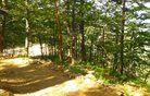 Iz Preddvora po senčnem gozdu na Potoško goro