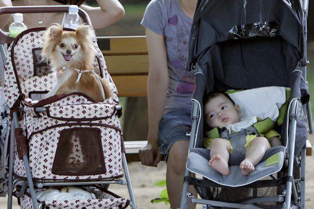 Dojenčki, ki svoje prve mesece preživijo v gospodinjstvu s psom, imajo manj vnetij ušes in dihalnih težav kot tisti, ki živijo v domovih brez najboljšega človekovega prijatelja, razkriva študija.