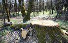 Na Goriškem opozarjajo na negotovo prihodnost lesarstva v državi