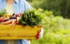 Anketa kaže: Slovenci večino zelenjave pridelamo na svojih vrtičkih