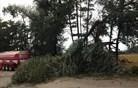 Nočna neurja: podrta drevesa, odkrite strehe, izpadi elektrike (video)
