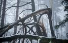 Po žledolomu sanirana četrtina poškodovane lesne mase