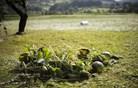 Moča v kmetijstvu povzročila za več let škode