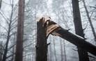 Delo v gozdu usodno za 38-letnika