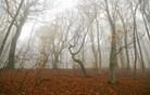 Kako lažje preživeti meglena jutra in deževne dneve?
