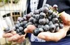 Štajerska veselica, ki je ne zamudi noben pravi ljubitelj vin