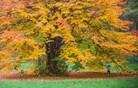 S kakšnim vremenom nam bo postregla jesen? (video)