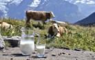 Otrokom, ki ne pijejo kravjega mleka, lahko primanjkuje vitamina D
