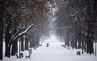 Obilno sneženje ohromilo Bolgarijo