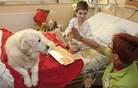 Ponekod si bolnišnic brez prostovoljcev ni več mogoče predstavljati